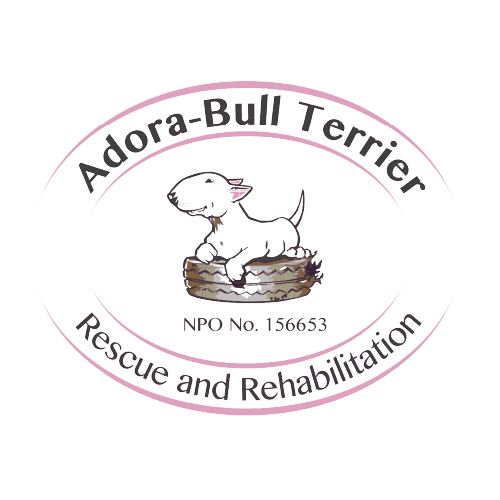 Adora-Bull Terrier Logo for the Outliers Coffee website www.outlierscoffee.co.za